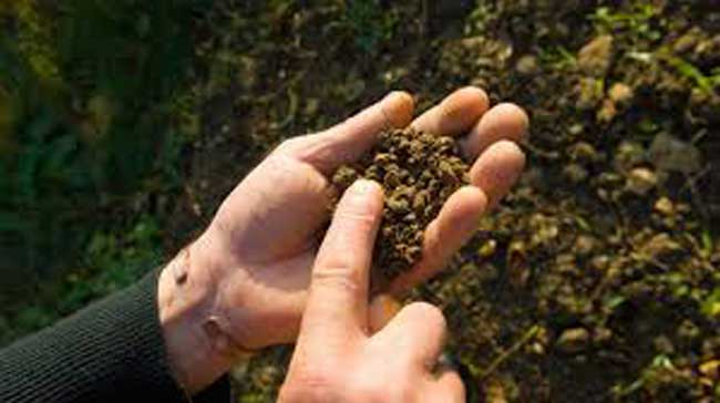 Soil Fertility Management